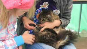 Playcityn eläinhoitolassa hoidetaan kissan kynsiä.